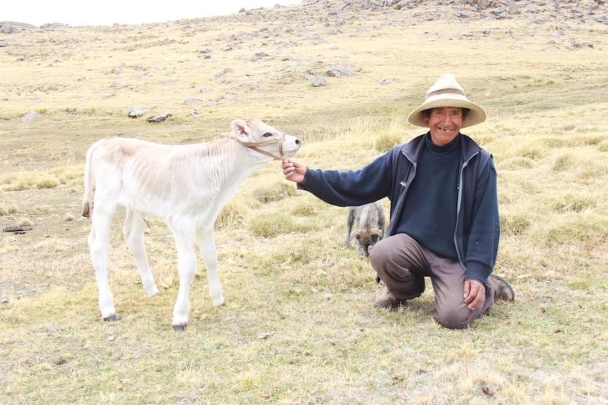 Velille_ganaderia_Cusco